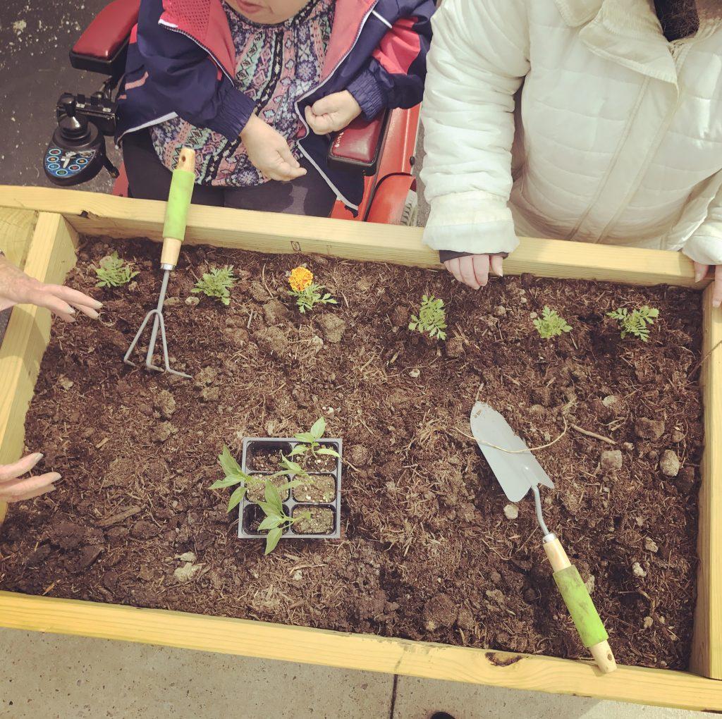 garden activities